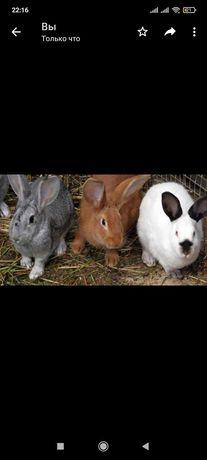 Продам кроликов недорого