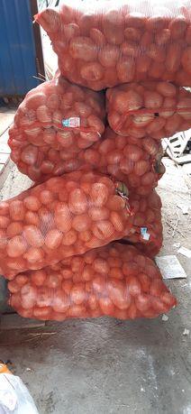 Нарынкольская картошка на зиму в рассрочку по 180тг