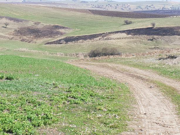 Inchiriez pe perioada determinata fanat,teren agricol in lacul vacilor