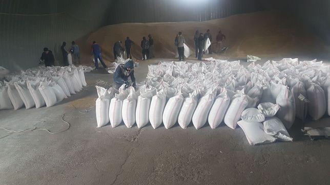 Пшеница чистая сухая