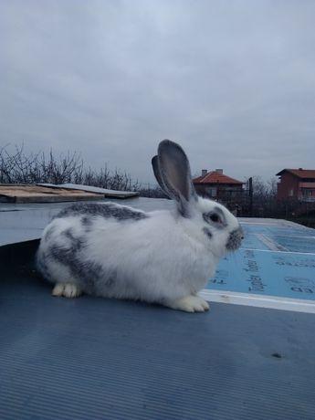Продавам зайци