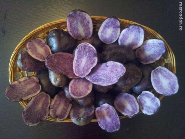 Vand cartofi mov-albastri, soiul Blue Congo, soi superior de cartofi.