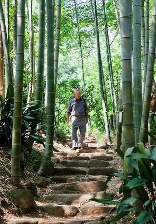 Seminte autentice de Bambus MOSO , pt gradinile Romaniei