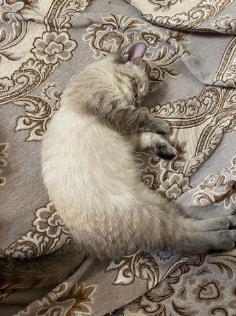 Ласковый котенок ищет дом (лоток, корм) 2000 тенге