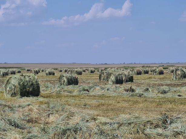 Продам сено в рулонах укос 2021 года