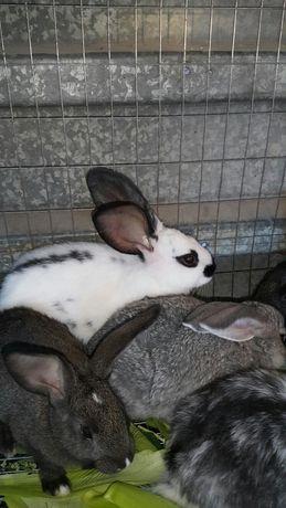 Продам крольчат разных пород