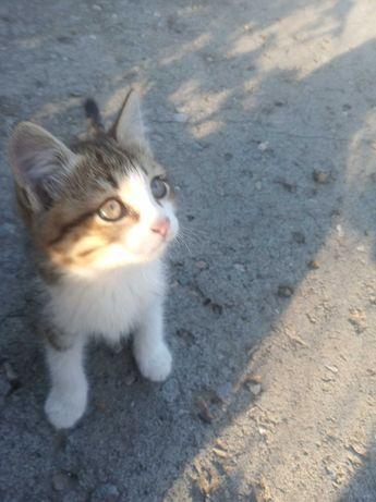 Котенок отдам любящим животных