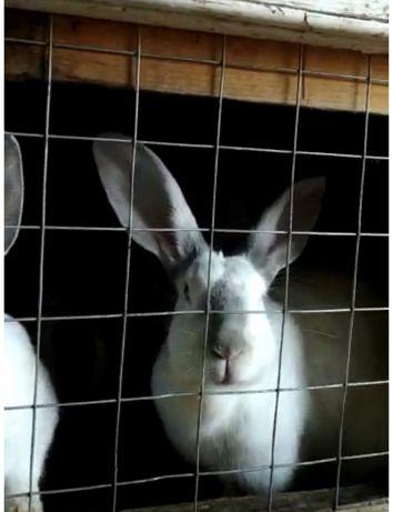 Кролики/үй қоян