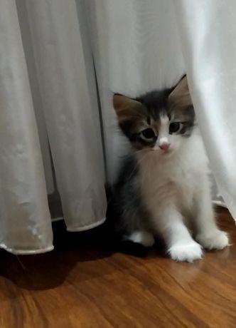Красивые и умные котята ищут своих хозяев