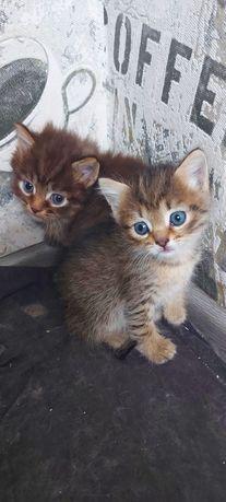 Отдам бесплатно котят пушистых!!!