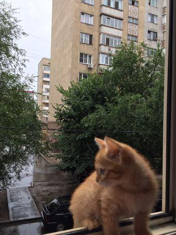 Котенок маленькая