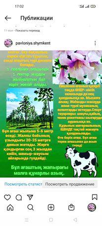 Павлония семена 10 гр 11 000 рассада  1  300