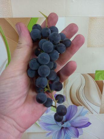 Продам виноград чёрный