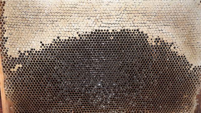 Мед разнотравье с гречкой