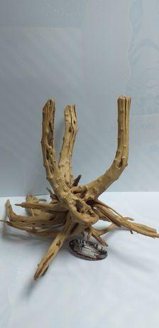 Мангровая коряга или паучий корень