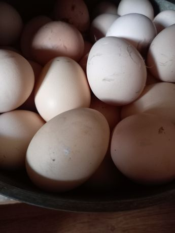 Продам яйца свежие домашние