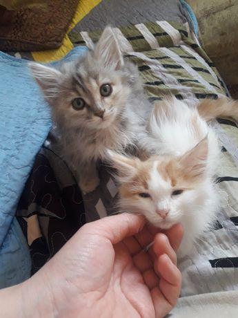 Отдам чистых, приученных котят