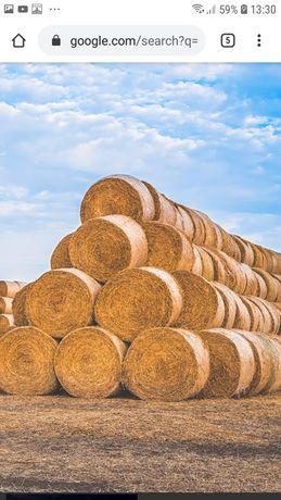 Салома, пшеничная, ячменная (сено закончилось)