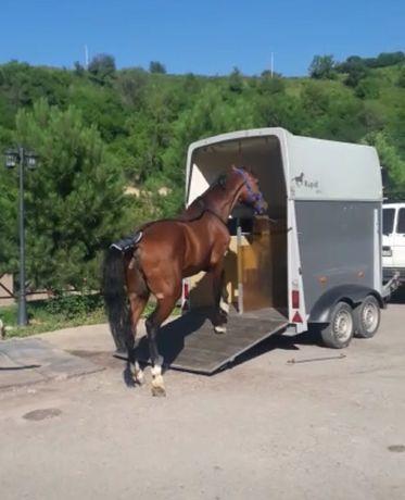 Коневозка перевозка животных