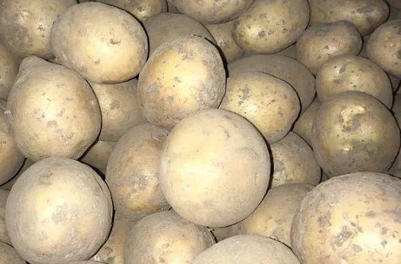 Семянной картофель ВЕДРО