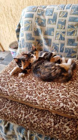 Котята трехцветные в добрые руки