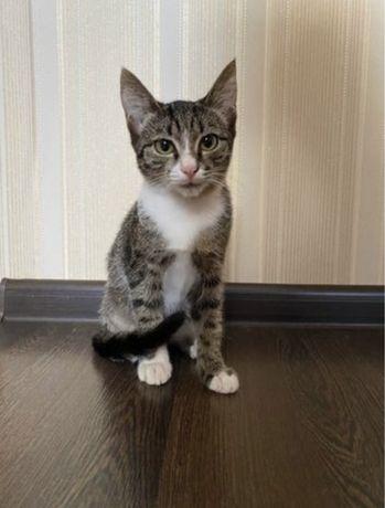 Котёнок, мальчик 4 месяца