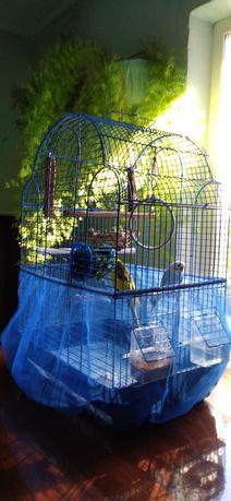 Продам попугаев в месте с клеткой