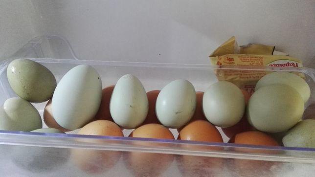 Ouă găini Araucana - fără colesterol