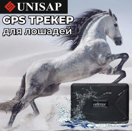 GPS для Лошадей/Жылкыга ЖПС Трекер/Батарейка до 100 дней/ТАРАЗ!