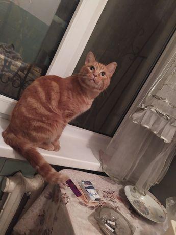 Пропал кот. Просьба сообщить о нем