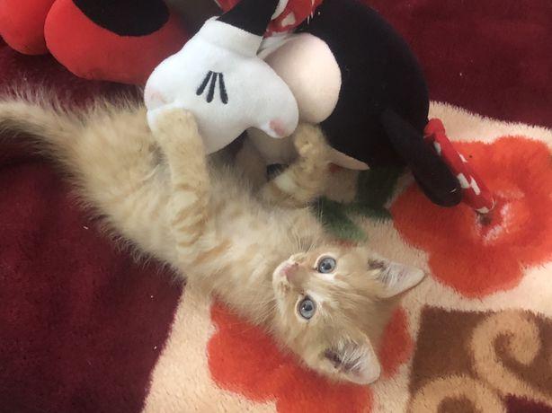 (котенок)отдам бесплатно 2 котят