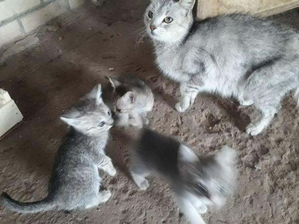 Котята родились 2 месяца назад