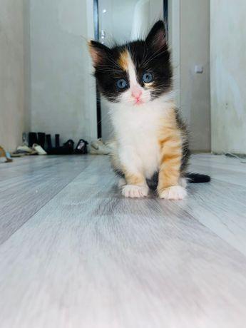 Котята домашние, две девочки