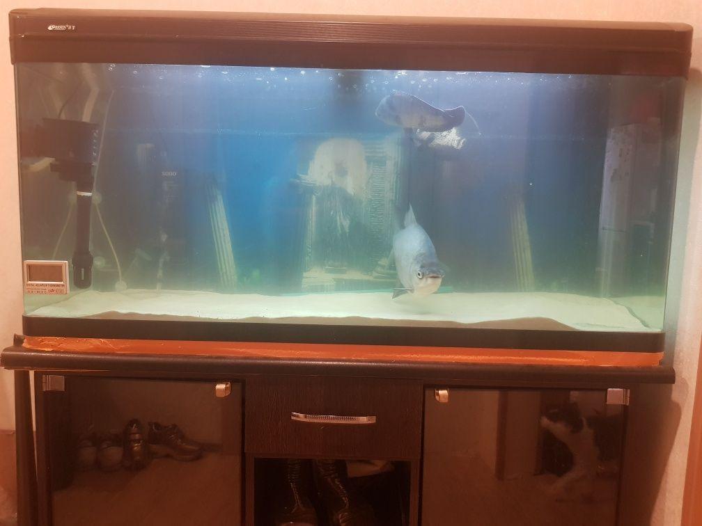 Продам аквариум 250 литров заводского типа + рыбы