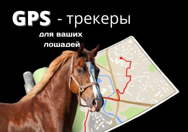 GPS трекер атқа, түйеге, сиыр және малға Актау