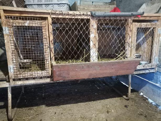 Vând 3 Cuști iepuri 150 toate3