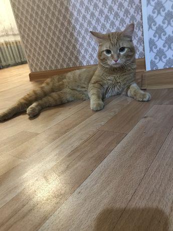 Кот по имени Бакси ищет дом.