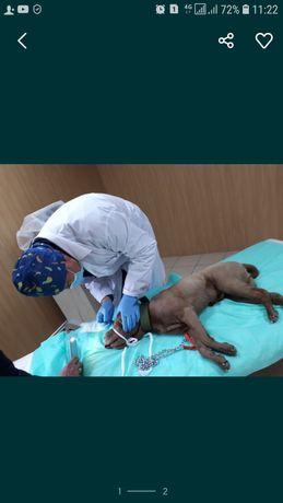 Ветеринарная клиника DOCTOR VET