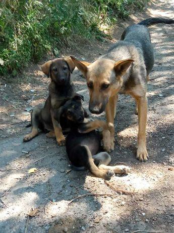Отдадим красивых щенков в добрые руки!!!