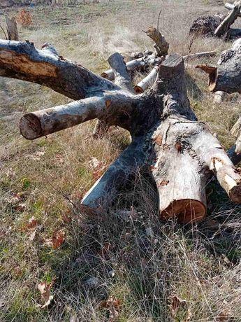 Дървен материал Корони от орех