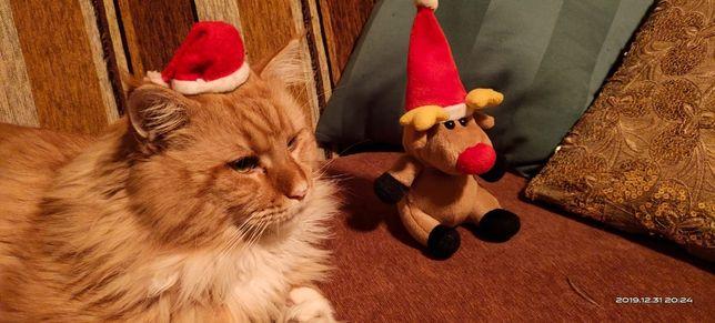 Мейн-кун вязка (титулованный кот)