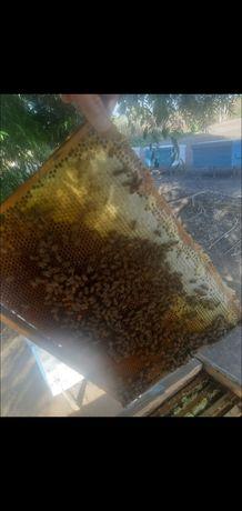 мед бал теренозек мед оптом от производителя