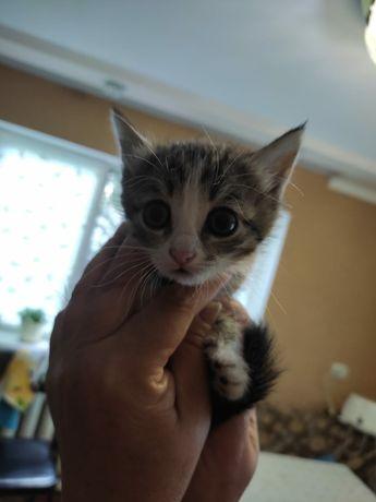 Котенок Черныш. Возврат больше месяца.