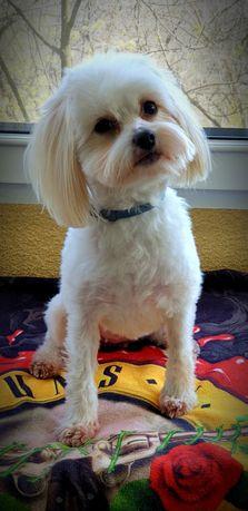 Cosmetica Canina la domiciliu-groomer-tund cainii catei -periaj canin