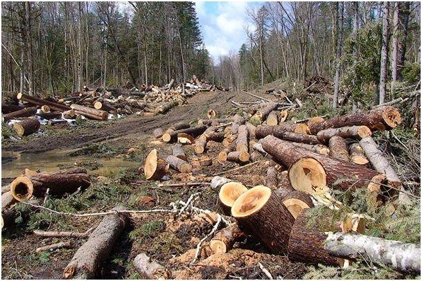 Услуги бензопилы. Спил деревьев , распил дров