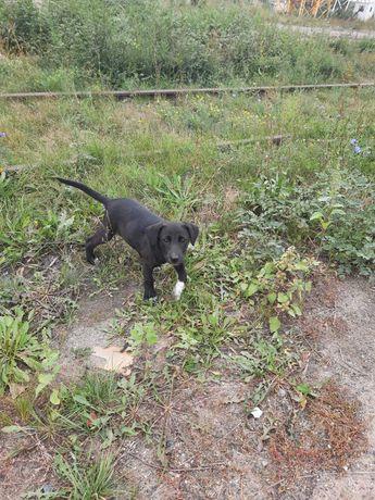 SOS!!! СРОЧНО щенок(девочка)ищет дом и хозяев