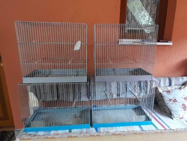 Colivii pt papagali