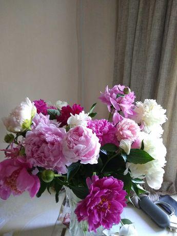 Садовые цветы. Пионы