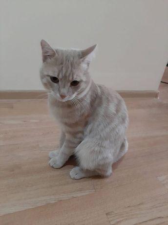 Пристраивается рыжий кот