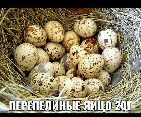 Перепелиное яйцо бөдене жумырткасы